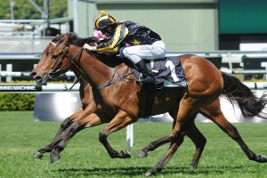Alpha Miss will be aiming for three wins from as many starts when lining up for the 2014 Widden Stakes