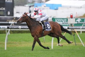 Glencadam Gold is the likely leader in the 2013 Caulfield Cup.