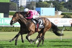 Myer Classic For 2017 Angst Stakes Duo Dixie Blossoms & Daysee Doom