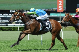 Paul Perry-trained Conchita has become the second horse to be scratched from the 2016 Magic Millions Classic. Photo by: Steve Hart