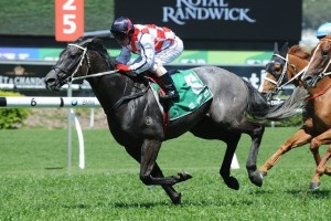 Multilateral is a leading chance for success in the 2014 Newcastle Cup