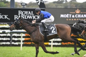 Shadow Hero, above, wins the 2019 Spring Champion Stakes at Randwick. Photo by Steve Hart.