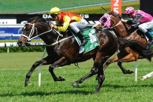Good Project will prove very hard to beat in the 2015 Sandown Stakes. Photo: Steve Hart