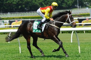 Good Project, above, has drawn barrier 5 in the Kingston Town Classic at Ascot. Photo by Steve Hart.