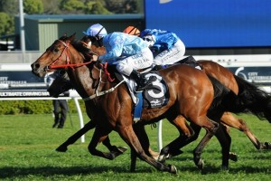 Avoid Lightning will be suited to a wet track in the 2015 Tattersall's Tiara. Photo: Race Horse Photos Australia
