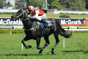 Kuro is our tip to win Saturday's Group 2 Expressway Stakes at Rosehill. Photo: Steve Hart