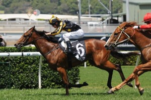 Trainer Gary Nickson has confirmed Alpha Miss will resume in the 2014 Silver Shadow Stakes