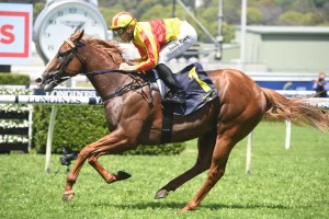 Quackerjack, above, has drawn a wide barrier in the 2019 Villiers Stakes at Randwick. Photo by Steve Hart.
