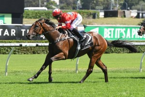 2018 Scone Cup Results: Sedanzer Salutes for the Punters