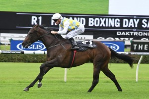 Into The Abyss, above, is among the nominations for the Widden Stakes at Rosehill. Photo by Steve Hart.