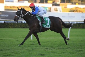 Coup Ay Tee is nominated for the 2013 Villiers Stakes.