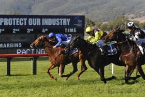 Roeinda (middle, yellow cap) is the Races.com.au tip to win Saturday's Queensland Day Stakes at Doomben. Photo: Steve Hart