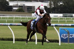 Burnstone is likely to contest a final tune-up for his major target in the Group 3 Blue Diamond Prelude C&G on February 14th. Photo: Adrienne Bicknell