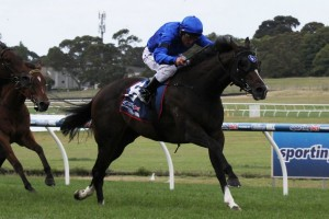 Java will return to racing in the Bel Esprit Stakes at Caulfield on Saturday. Photo: Adrienne Bicknell
