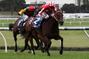 Shamal Wind will contest the 2015 Oakleigh Plate second-up. Photo: Adrienne Bicknell