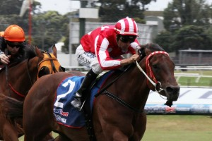 Shamal Wind may contest the 2015 Oakleigh Plate. Photo: Adrienne Bicknell