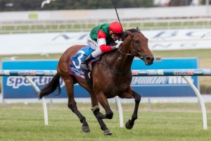 Petrology will return to a mile trip in the Group 1 Australian Guineas at Flemington on Saturday.