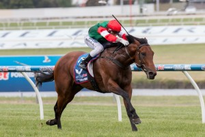 Petrology is our tip to take out Saturday's Bletchingly Stakes at Caulfield. Photo: Sarah Ebbett