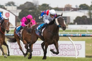 Politeness will return to racing in the 2015 Geoffrey Bellmaine Stakes on February 14th. Photo: Sarah Ebbett