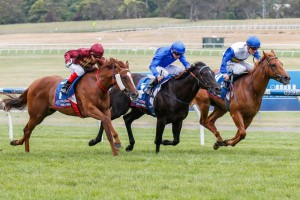 Mesa (middle) will trial at Sandown on Tuesday ahead of a 2015 Blue Diamond Stakes campaign. Photo: Sarah Ebbett