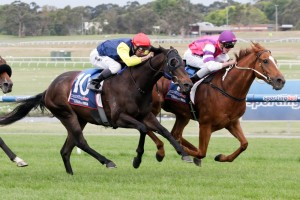The New Boy (outside) is one of four horses to be ridden by Kieran Shoemark at Flemington on Saturday.