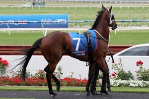 The Monstar is nominated for the Starlight Stakes at Rosehill. Photo by Adrienne Bicknell.
