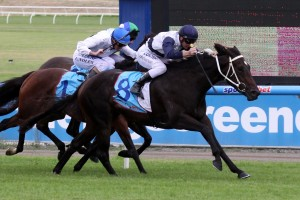 Lady Lakshmi is reportedly in great condition ahead of the 2015 Bow Mistress Trophy. Photo: Race Horse Photos Australia