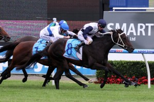 Lady Lakshmi has been confirmed in the final field for the 2014 Sandown Stakes. Photo: Race Horse Photos Australia