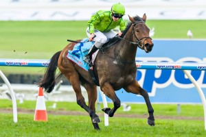 Griante is a chance of running in the Tattersall's Tiara if she performs well in the Gai Waterhouse Classic this weekend.