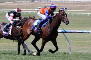 Tried And Tired will jump from barrier one in the Chester Manifold Stakes on Saturday.