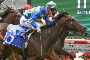 Ideas Man, above, is one of the top fancies for theeChairman's Stakes at Caulfield. Photo by Ultimate Racing Photos.