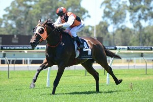 That's A Good Idea requires a dry track to contest Saturday's Group 2 Expressway Stakes. Photo: Steve Hart