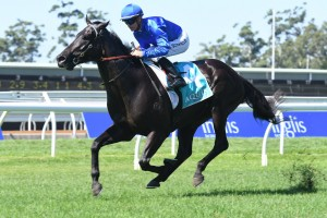 Kementari, above, will be aimed towards the 2018 Randwick Guineas at Randwick. Photo by Steve Hart.