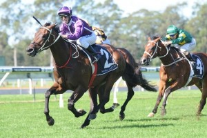 Group 1 champion Boban is likely to contest the 2014 George Main Stakes