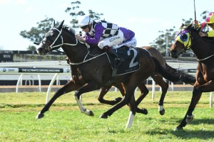 2017 Wyong Gold Cup Field & Betting: Sayed Odds-On