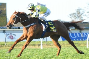 Trainer Joe Pride is confident Tiger Tees can capitalize on a wet Randwick track in the 2014 Warwick Stakes