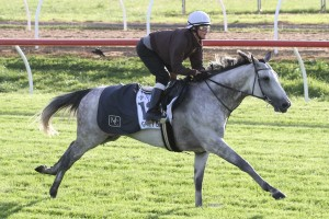 Grey Lion is set to return to the races in Saturday's Group 3 Easter Cup at Caulfield. Photo: Ultimate Racing Photos