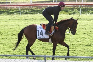 Melbourne Cup Horses Top 2017 Geelong Cup Nominations