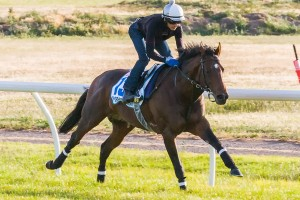 Trainer Andreas Wohler is thrilled with the condition of Protectionist ahead of the 2014 Melbourne Cup. Photo: Race Horse Photos Australia
