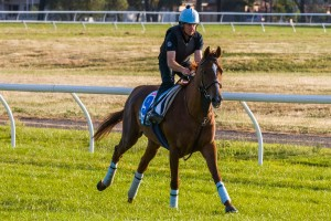 Red Cadeaux is on track for a successful run in the 2015 Australian Cup.