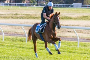 Red Cadeaux will race in his fourth consecutive Melbourne Cup on Tuesday.