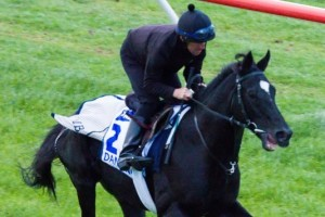 Dandino will once again start wide in the Caulfield Cup.