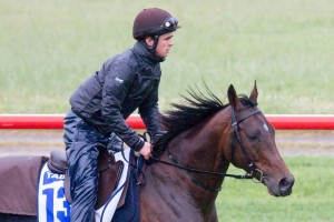 Dunaden will have his third run in the Melbourne Cup in 2013.