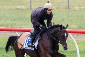 Mount Athos has drifted in the 2013 Melbourne Cup betting odds. Photo by Race Horse Photos Australia.