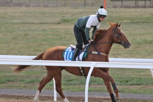 Co-trainer David Hayes is extremely confident that Criterion is a genuine winning chance in the 2015 Melbourne Cup. Photo by: Ultimate Racing Photos