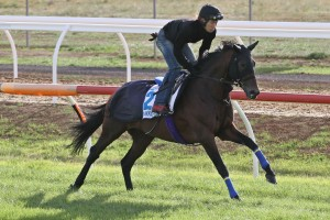 Japanese raider Hokko Brave is in great condition ahead of Tuesday's 2015 Melbourne Cup. Photo: Ultimate Racing Photos