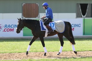 Secret Number has reportedly taken well to his time in Australia. Photo: Ultimate Racing Photos