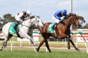 Qewy (blue silks) is our tip to win Saturday's Listed Sandown Cup. Photo: Ultimate Racing Photos